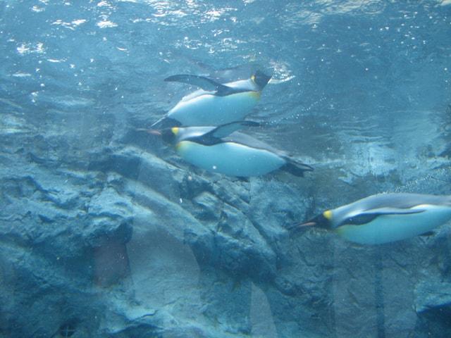 北海道の人気の動物園!旭山動物園